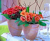 Primula acaulis (spring primrose), cornus alba 'Sibrica' (redwood, dogwood)