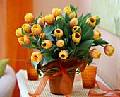 Tulipa 'Ad Rem' (tulip), Salix alba 'Tristis' (weeping willow)