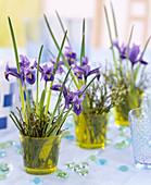 Iris reticulata (Netziris), Vaccinium (blueberry)