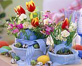 Tulipa (tulip), Narcissus 'Bridal Crown', Erysimum