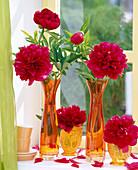 Paeonia officinalis 'Rubra Plena' in orange vases
