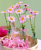 Chrysanthemum coccineum / Margerite in kleinen Flaschen