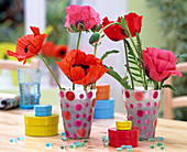 Papaver orientale (perennial poppy) in point cups, colorful paper cans