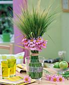 Hordeum (barley), Chrysanthemum coccineum 'E.M.Robinson'