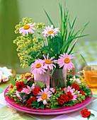 Chrysanthemum coccineum (daisies), Alchemilla (lady's mantle)