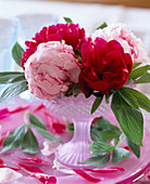 Paeonia (peony) in pink Ice cream cups