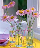 Chrysanthemum coccineum 'E.M.Robinson' / Bunte Margerite in kleinen Glasflaschen