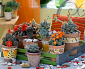 Blooming cactus arrangement on tray