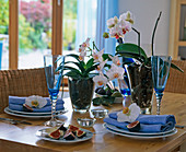 Phalaenopsis (Malay flower) in glass vases