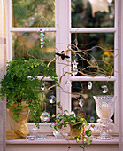 Adiantum raddianum 'fragans' (maidenhair fern), Hedera (ivy)