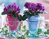 Saintpaulia Ionantha (African Violet)