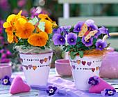 Viola sorbet 'Beaconsfield' (horn violet)