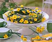 Wreath of jasmine tendrils with daffodils