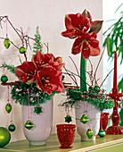 Hippeastrum (Red Amaryllis), Asparagus (ornamental asparagus)