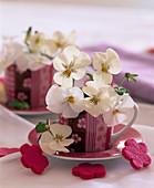 Viola sorbet 'French Vanilla Improved' (horn violet)