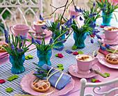 Muscari (grape hyacinth)