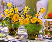 Narcissus 'Tete À Tete' (Daffodil) Easter