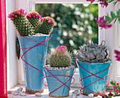 Mammillaria spinosissima, Parodia (cactus)