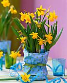 Narcissus 'Tete à Tete' (daffodil)