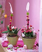 Bellis (pink daisy), Tulipa (pink tulips)