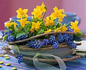 Narcissus 'Tete a Tete' (daffodil)