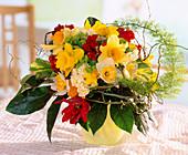 Narcissus (narcissus), Tulipa (parrot tulip)
