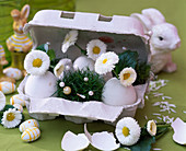 Egg box with eggs as vases, Bellis (Daisies)