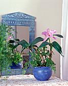 Cattleya hybrid and Adiantum raddianum