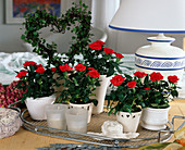 Rose chinese