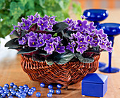Saintpaulia ionantha-filled African violets in colorful glass pots