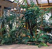 Conservatory with Trachycarpus, Citrus, Cycas