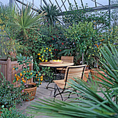 Greenhouse with Citrus, Acacia