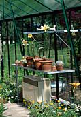 Nut greenhouse