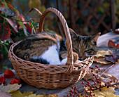 Korb mit Katze 'Minka'