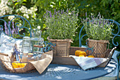 Fragrant table decoration of lavandula (lavender) in wire baskets