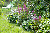 Shadow bed with Astilbe (prickly pear) and Hosta