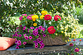 Basket of calibrachoa (magic bells), zinnia (zinnia)