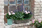 Rosa, Lavandula and Salvia officinalis' Berggarten