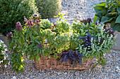 Various types of basil in basket box