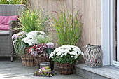Terrace with white chrysanthemums and grasses