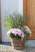 Basket with Chrysanthemum indicum (autumn chrysanthemum), Panicum