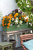 Orange-yellow balcony with summer flowers and climbing plants