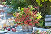 Bouquet made of roses (rosehip) in basket vase