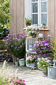 Late summer terrace with summer flowers