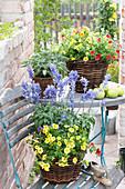 Backyard with Calibrachoa (magic bell), Salvia farinacea