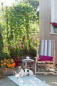 Homemade wooden box with climbing plants as privacy screen