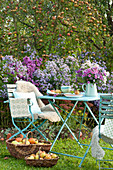 Small seat at the perennial border in front of malus (apple tree), aster
