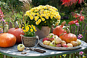 Autumn arrangement on table at the garden fence, Chrysanthemum indicum