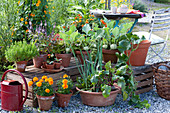 Snack terrace with vegetables and summer flowers