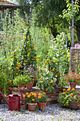 Clay pots and baskets with Thunbergia alata (black-eyed Susanne)